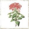 FORLI Flowers Decor Mix 20X20